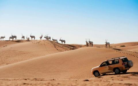 Al-Maha-dxbam-attraction-drive-9692-hor-wide
